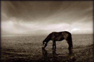 Horse_Drinking-Lake_bgp